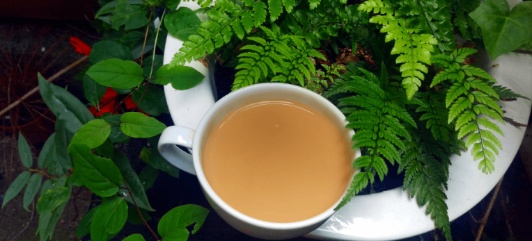 tea-with-ferns